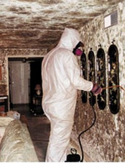 Black mold removal Black Mold   Pictures, Symptoms, Removal, Health Effects, Risks