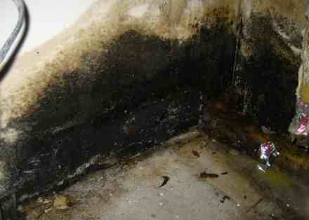 toxic black mold pictures 7 Black Mold   Pictures, Symptoms, Removal, Health Effects, Risks