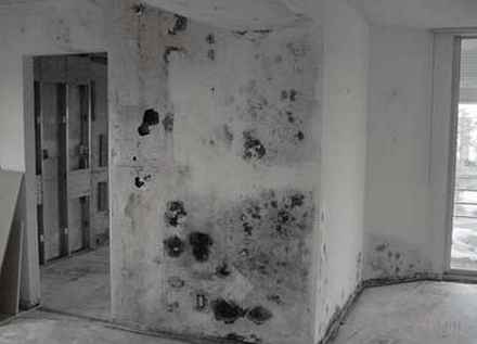 Toxic Black Mold Pictures
